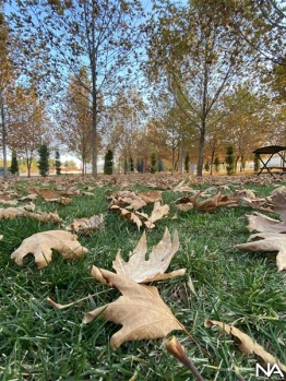 Şanlıurfa'da sonbahar