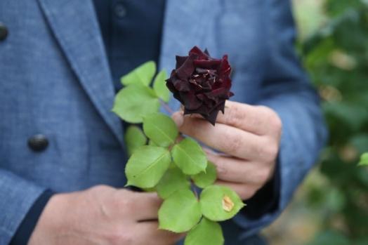 Halfeti'nin Karagülü çiçek açtı
