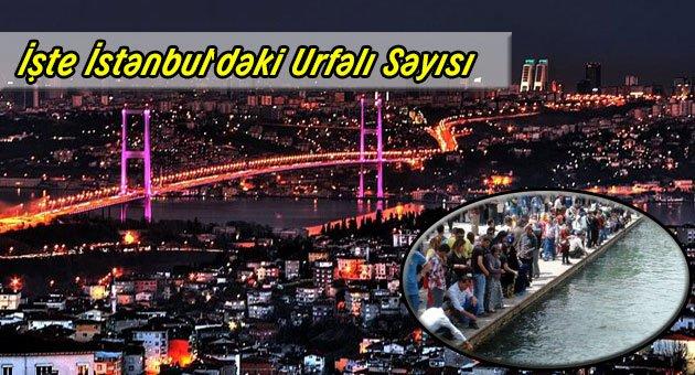 İstanbul'da Kaç Urfalı Var?