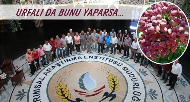 Urfa'da Antep fıstığı eğitimi verildi
