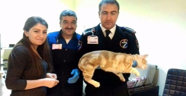 Havaalanında Bulunan Yaralı Kedi Tedavi Edildi