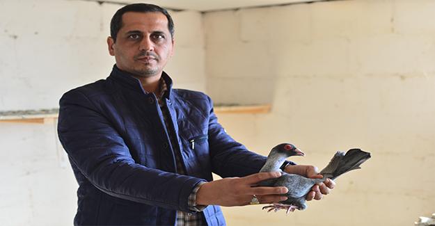 Paha Biçemediği Kuşlara Güvenlik Kameralı Koruma