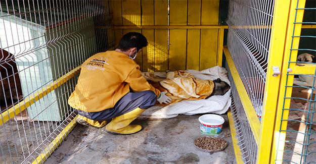 Tedavi Edilen Sokak Hayvanlarına Battaniyeli Hizmet