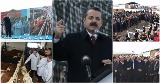 Türkiye Şap'tan Arındırılacak