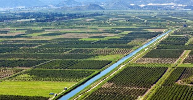 Bahar Yağmurları Tarım Arazilerine Yaradı