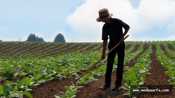 Genç Çiftçi Projelerinin Değerlendirme Sonuçları Açıklandı