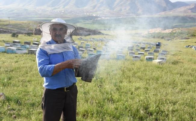 Bal arılarının yayla yolculuğu