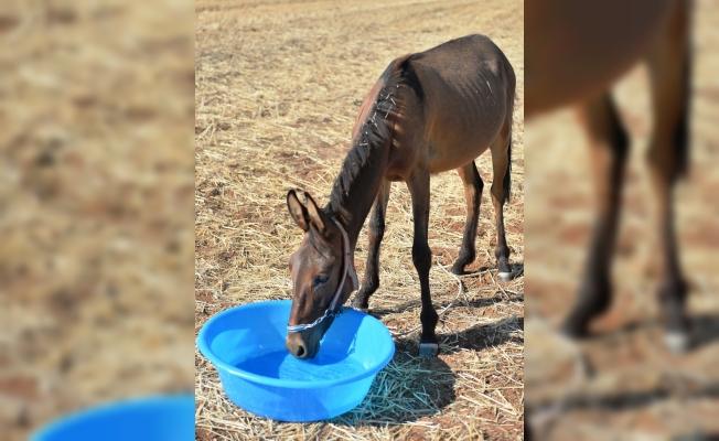 Tarlada susuz bırakılan hayvanlar için para cezası
