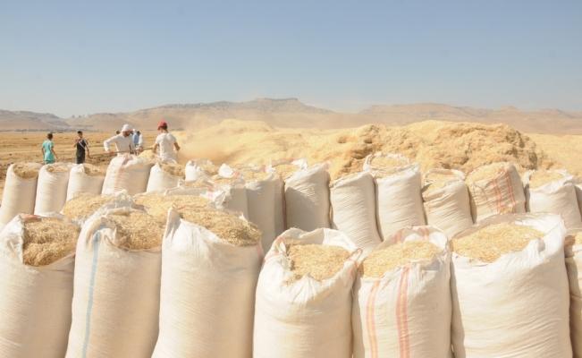 Yağış buğday rekoltesini artırdı