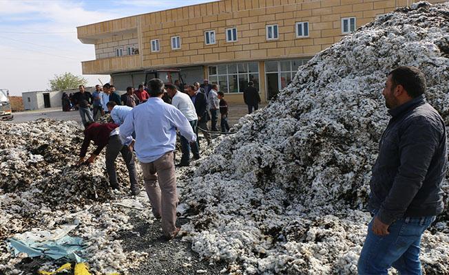 Harran'da tonlarca pamuk kül oldu