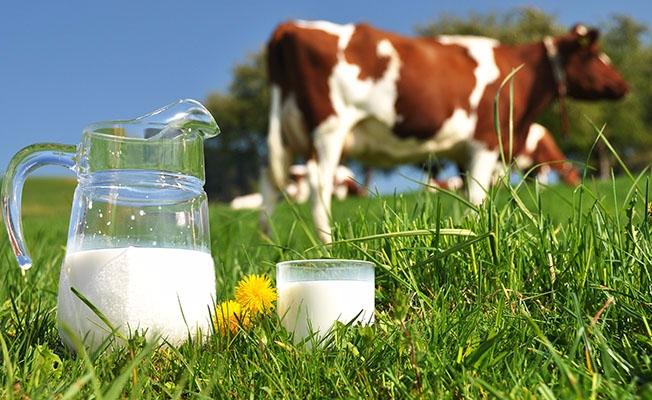 Toplanan inek sütü miktarı eylülde arttı