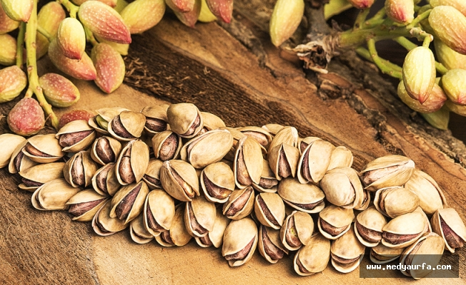 Fıstıkta en fazla üretim artışı Şanlıurfa'da