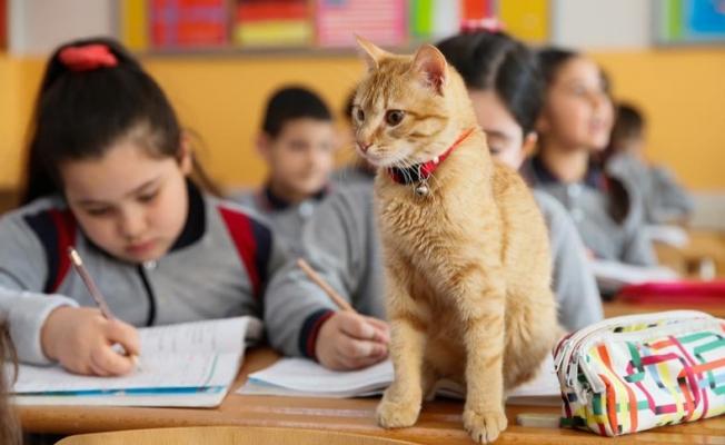 Kedi 'Tombi' sınıfa döndü