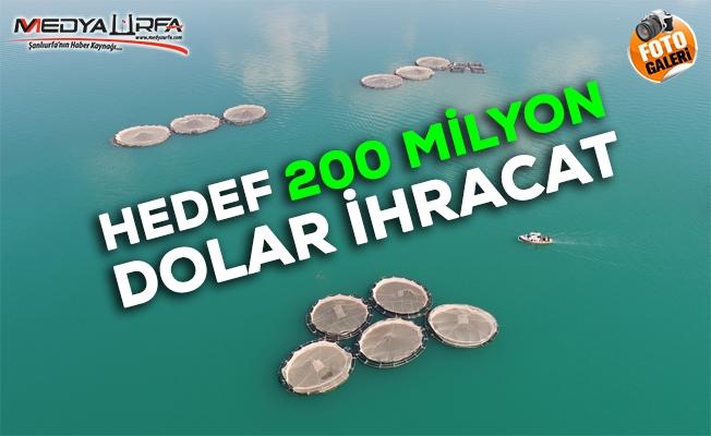 """Urfa'da """"Fırat""""ın balıkları yurt dışına satılıyor"""