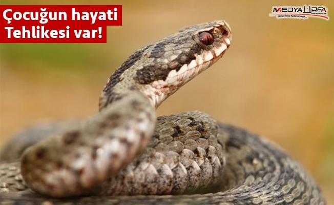 Haliliye'de parkta oynayan çocuğu yılan ısırdı