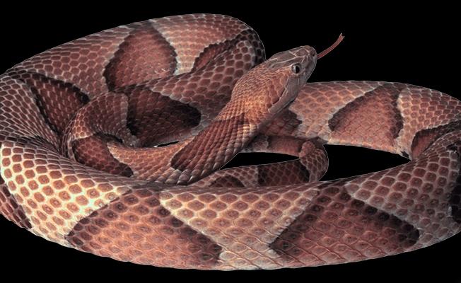 Siverek'te yılanın ısırdığı kadın öldü!
