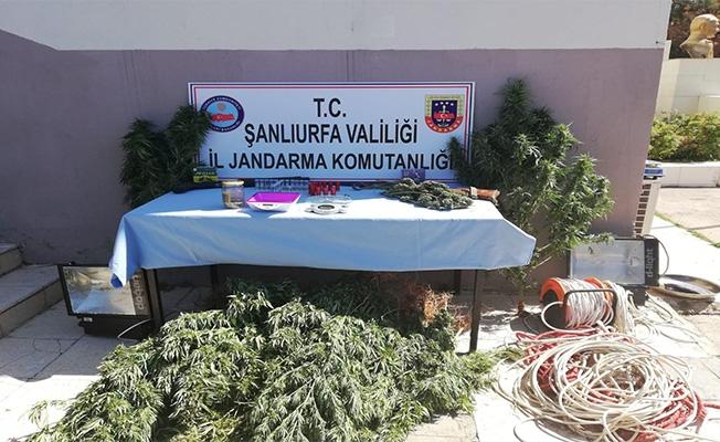 Şanlıurfa'da Jandarma'dan uyuşturucu operasyonu