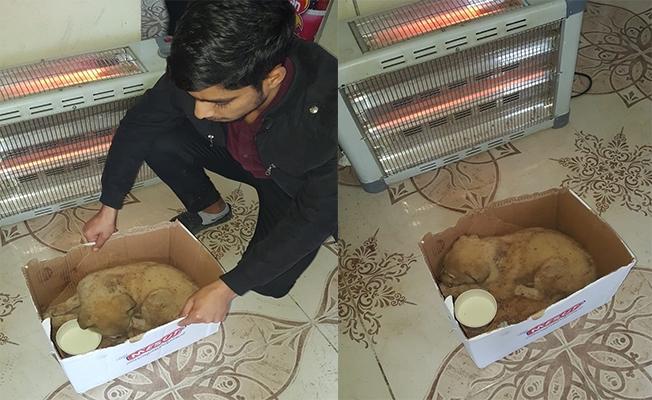 Haliliye'de menfeze sıkışan köpeği öğretmenler kurtardı