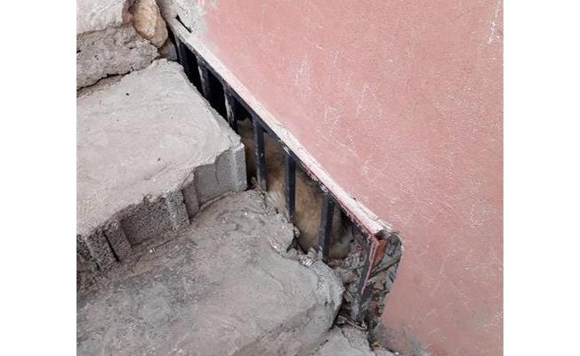 Pencereye sıkışan köpek itfaiye ekiplerince kurtarıldı