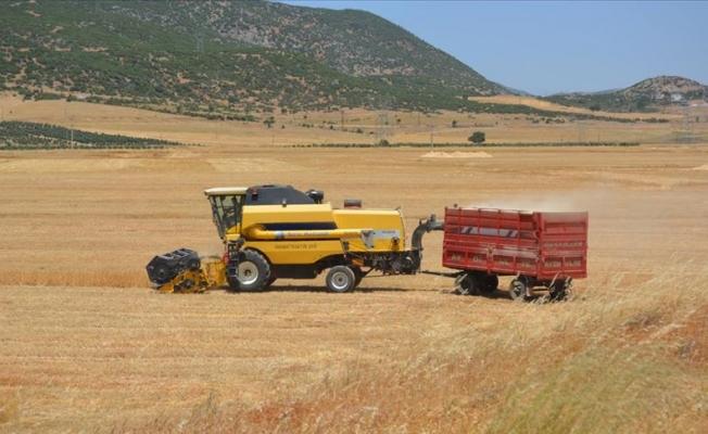 Gaziantep'te buğday hasadına başlandı
