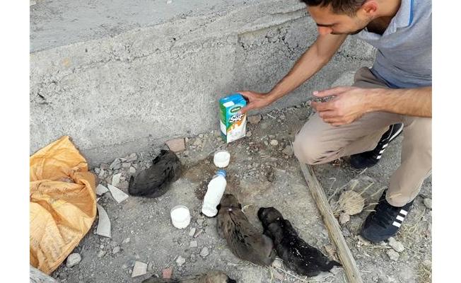 Ölmek üzere olan yavru köpekler kurtarıldı