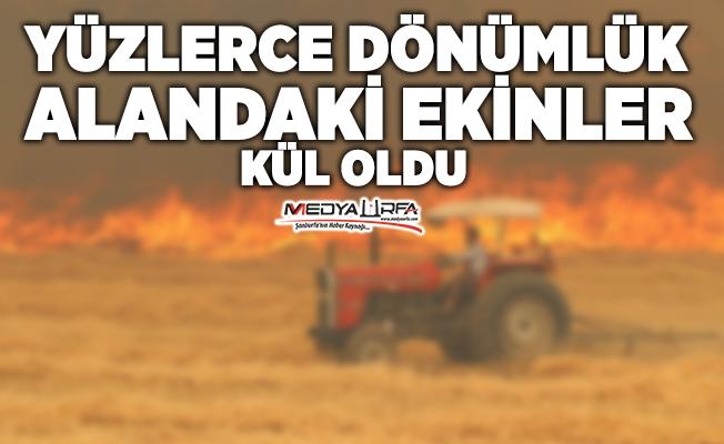 Siverek'te arpa ekili tarlalarda yangın