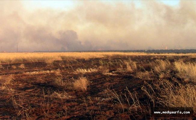 Suriye'de binlerce dönümlük ekili arazi yakıldı