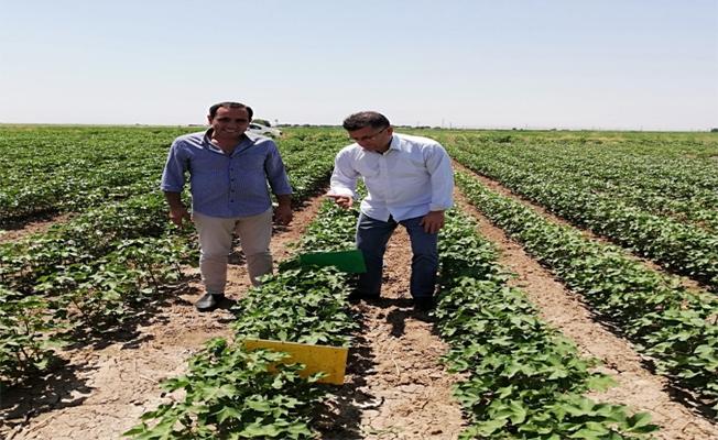 Şanlıurfa'nın Suruç İlçesindeÇiftçiler Bilgilendirildi