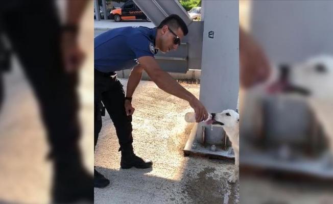Polisin sokak köpeğine merhameti
