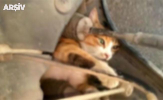 Gazetecilerin otomobiline kedi sıkıştı