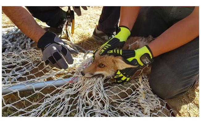Kuyuya düşen tilki 6 saatlik çalışmayla kurtarıldı