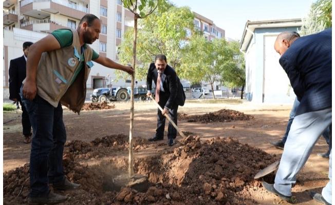 Canpolat, ağaçları toprakla buluşturuyor