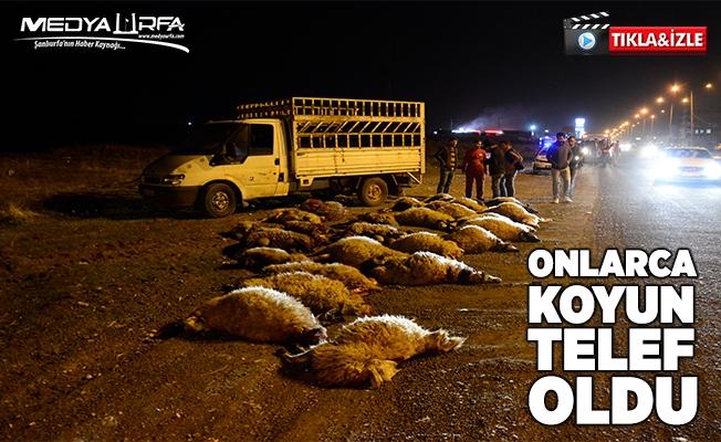 Ahırdan kaçan koyun sürüsüne otomobil çarptı