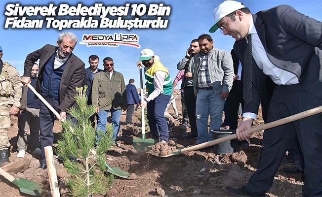 Başkan Aydın Siverek'te ağaç dikti