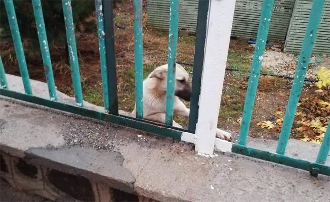Demire sıkışan köpeği itfaiye kurtardı