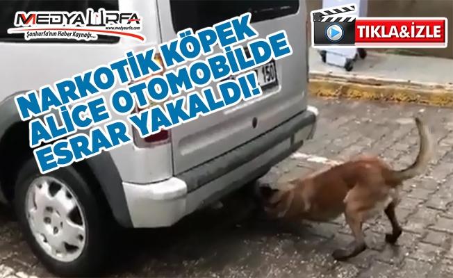 Narkotik Köpek Otomobilde Esrar Yakaladı