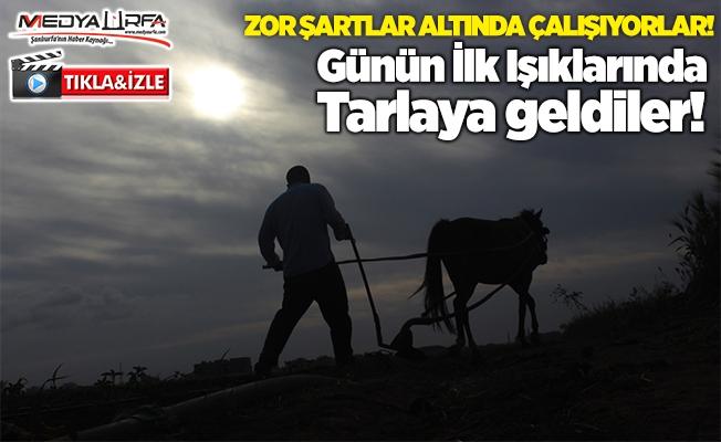 Yasaktan muaf tutulan çiftçiler üretime devam etti