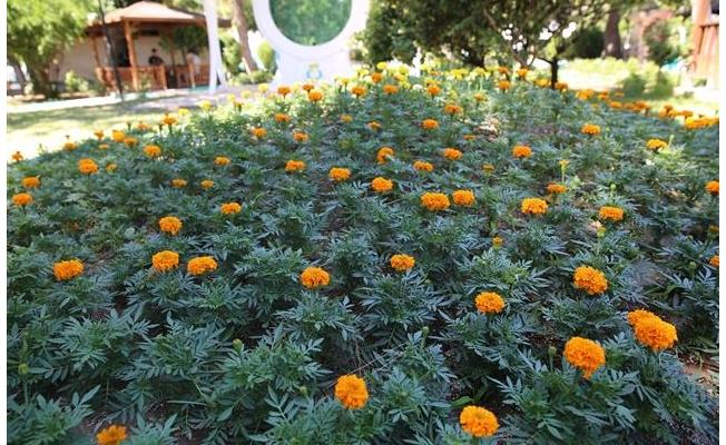 Haliliye'nin parklarında her mevsim bahar