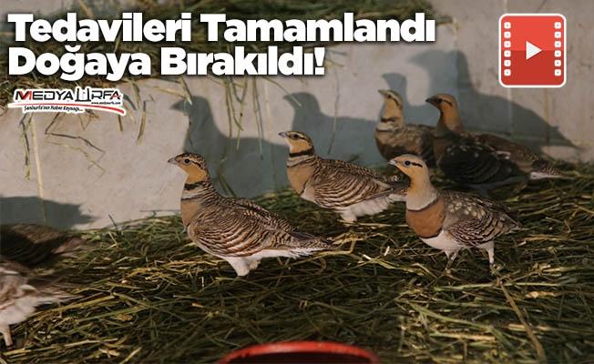 Kılkuyruk bağırtlak kuşları doğaya bırakıldı