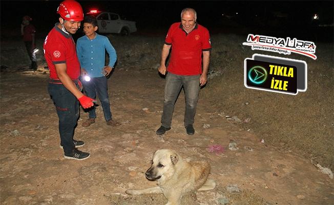 Su kuyusuna düşen köpekleri itfaiye kurtardı