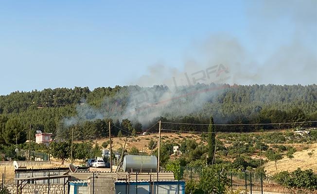 Atatürk Ormanı'nda yangın