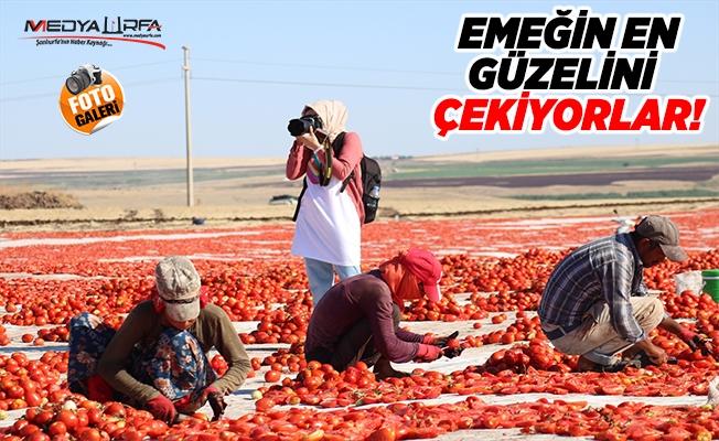 Kurutmalık domates sergisi doğal stüdyo oldu