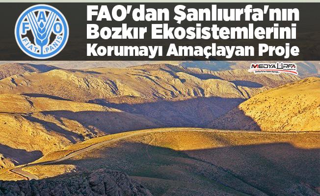 FAO'dan Urfa bozkırını koruyacak proje