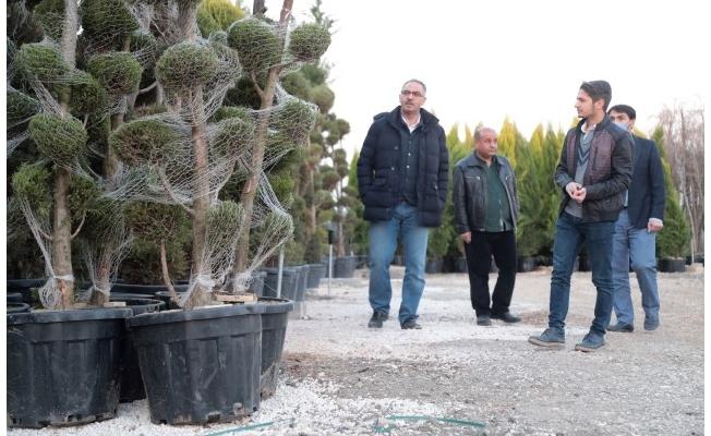 Eyyübiye'de farklı türlerde yeni ağaçlar dikilecek