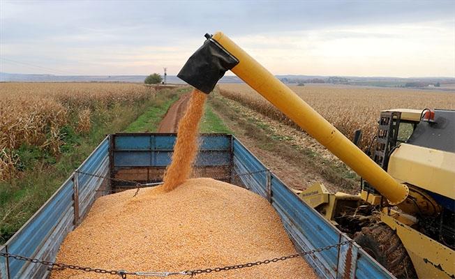 Şanlıurfa'da tarımsal üretim artarak devam etti