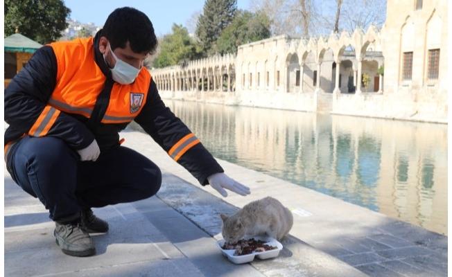 Hafta Sonu Sokak Hayvanları Unutulmadı