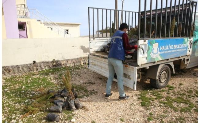 Haliliye'den kırsala yeşil seferberliği