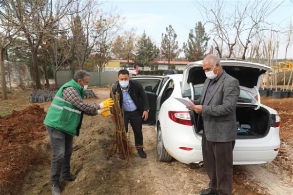 Şanlıurfa'da Nar Fidanları Dağıtılmaya Başlandı