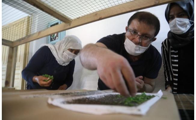 Büyükşehir'den İpekböcekçiliği için çiftçiye tam destek