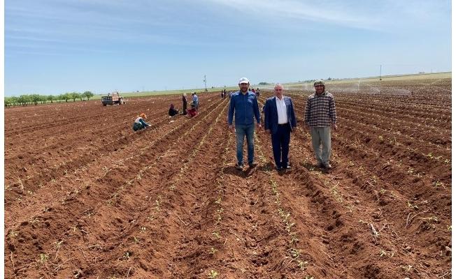 Viranşehir'de tıbbi aromatik bitkiler yetiştirilmeye başlandı